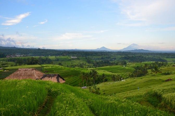 Wander Pi Wednesdays: Bali's Jatiluwih Rice Terrace